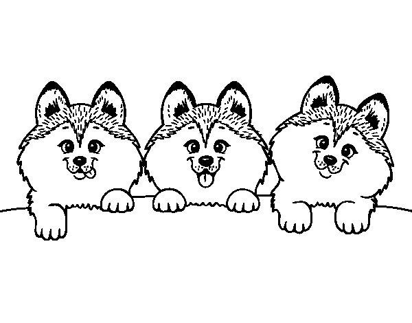 Coloriage de 3 chiots pour colorier - Coloriage chiot ...