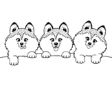 Dibujo de 3 chiots