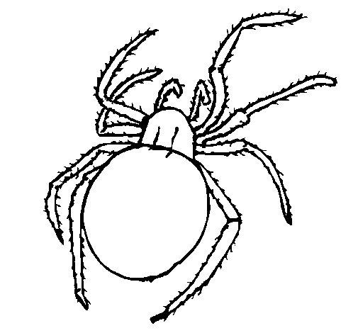 Coloriage de Araignée venimeuse pour Colorier