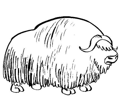 Coloriage de bison pour colorier - Coloriage bison ...