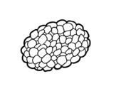 <span class='hidden-xs'>Coloriage de </span>Champignon tuber à colorier