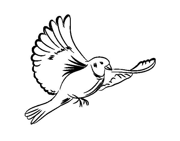 Coloriage de colombe blanche pour colorier - Colombe a colorier ...