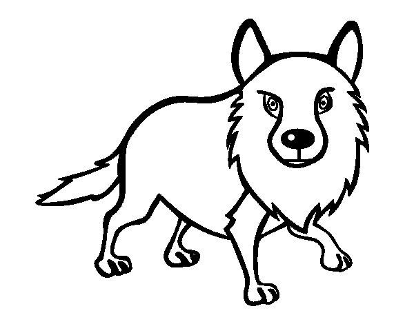 Coloriage de Coyote adulte pour Colorier