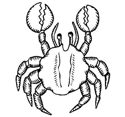 Coloriage de Crabe à grosse pinces pour Colorier