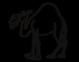 Dibujo de Dromadaire