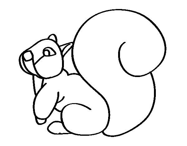 Coloriage de cureuil avec une grande queue pour colorier - Coloriage d ecureuil ...