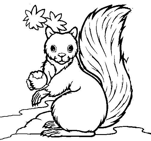 Coloriage de Écureuil pour Colorier