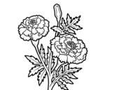 <span class='hidden-xs'>Coloriage de </span>Fleur merveille à colorier