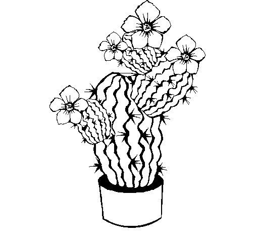 Coloriage de fleurs de cactus pour colorier - Coloriage cactus ...
