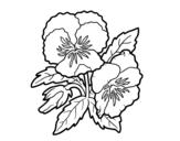 <span class='hidden-xs'>Coloriage de </span>Fleurs de pensée à colorier