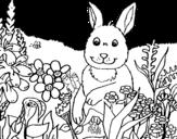 <span class='hidden-xs'>Coloriage de </span>Lapin en campagne à colorier