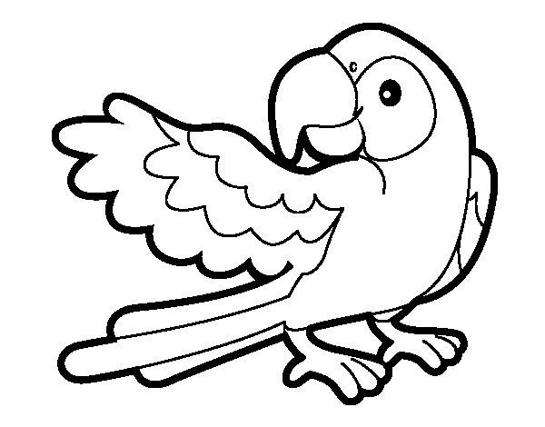 Coloriage de perroquet avec wideout pour colorier - Perroquet en dessin ...