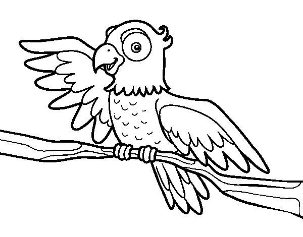 Coloriage de Perroquet en liberté pour Colorier
