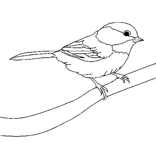 Coloriage de petit oiseau pour colorier - Oiseau dessin facile ...