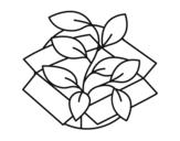 <span class='hidden-xs'>Coloriage de </span>Planta Ecológica à colorier