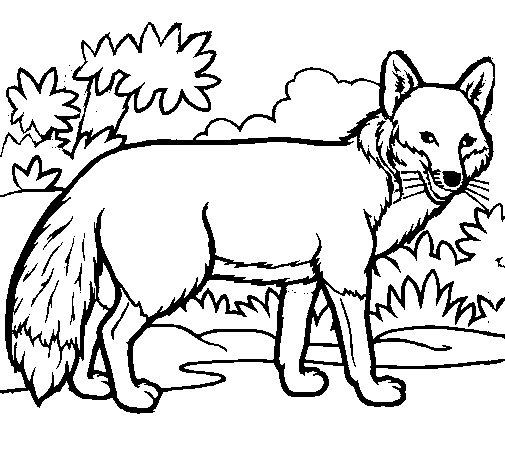 Coloriage de renard pour colorier - Coloriage petit renard ...