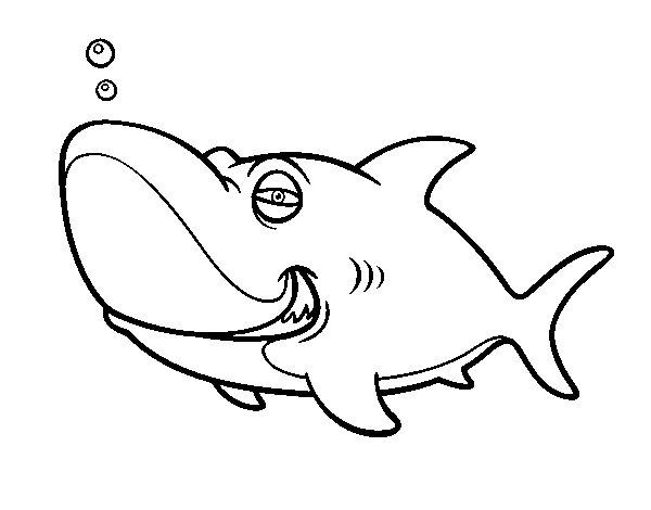 Coloriage de requin tigre pour colorier - Photo de requin tigre a imprimer ...