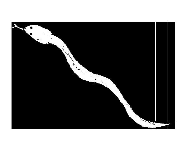 Coloriage de Serpent venimeux pour Colorier