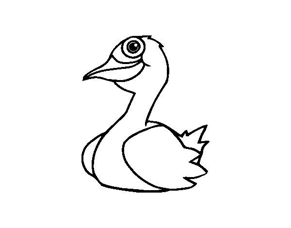 Coloriage de Un canard pour Colorier