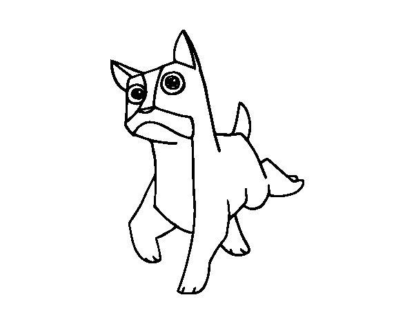 Coloriage de un chien boxer pour colorier - Coloriage de chien boxer ...