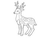 <span class='hidden-xs'>Coloriage de </span>Un jeune cerf à colorier