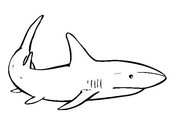 Coloriage de Un requin nageant pour Colorier