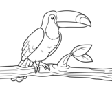 <span class='hidden-xs'>Coloriage de </span>Un toucan à colorier