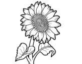 <span class='hidden-xs'>Coloriage de </span>Un tournesol à colorier
