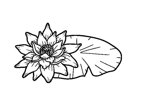 Coloriage de une fleur de lotus pour colorier - Colorier une fleur ...