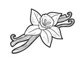 <span class='hidden-xs'>Coloriage de </span>Vanille à colorier
