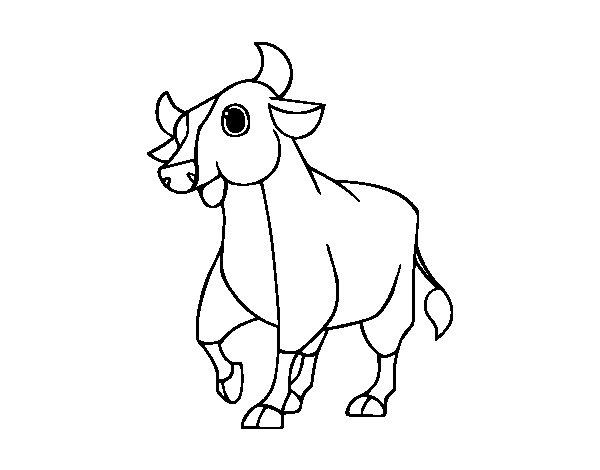 Coloriage de veau pour colorier - Coloriage petit veau ...