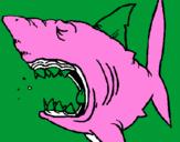 Coloriage Requin colorié par JULES