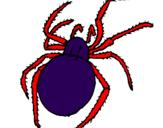 Coloriage Araignée venimeuse colorié par tifenn