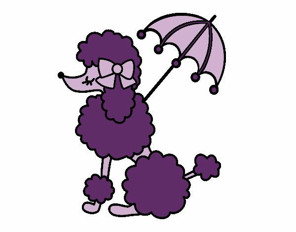 Caniche avec  parasol