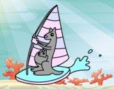 Kangourous sur une planche windsurf