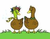 Paire de canards