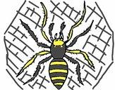 Araignée tigre