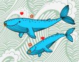 Coloriage Baleines colorié par raphael
