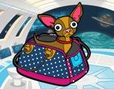 Chihuahua voyage