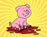Porco na lama