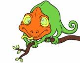 Chamaeleonidae sur une branche