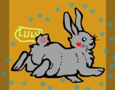 Lapin content