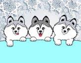 3 chiots