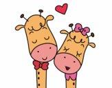 Girafes amour