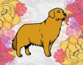 Coloriage Chien Golden retriever colorié par winnie