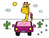 Girafe conduite