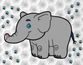 Un petit éléphant