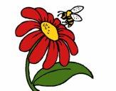 Marguerite avec une abeille