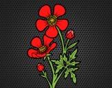 Coloriage Fleur bouton d'or colorié par Chantou