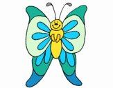 Papillon 15